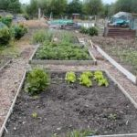 Allotment & Garden Paths
