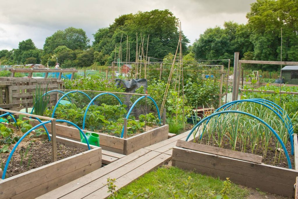 Allotment Raised Beds