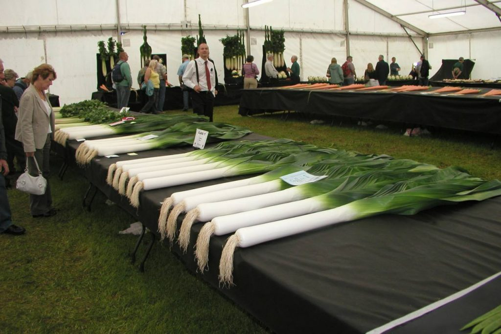 Exhibition Blanched Leeks