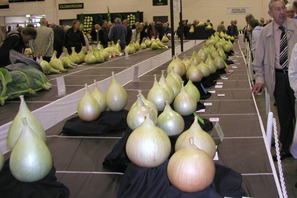 Large Onions Exhibition