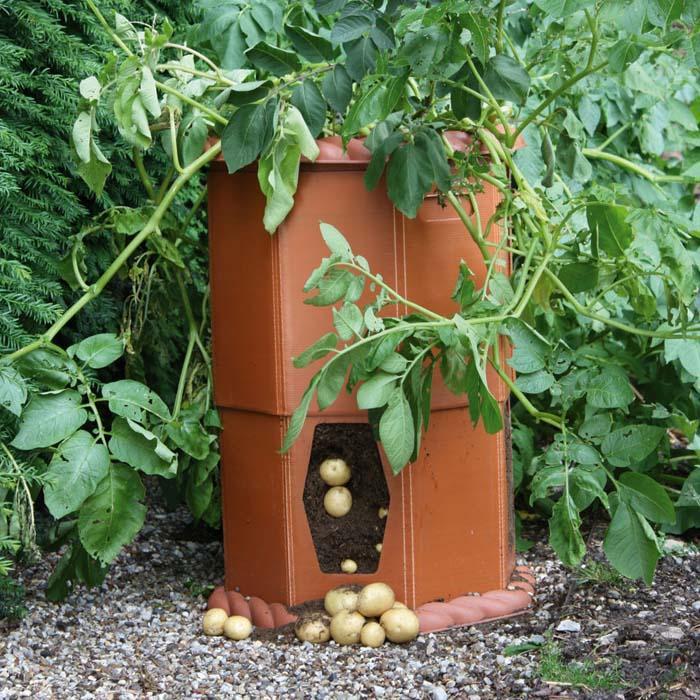 Growing Potatoes In A Barrel Patio Growing Potatoes
