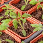 Best Temperatures for Seed Germination
