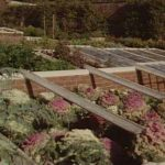 Cold Frames - Uses of Coldframes - Types of Coldframe