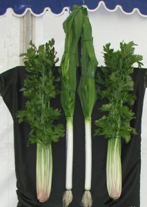 Trench Celery Blanched Leek