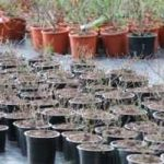 Become an Urban Farmer and Start Growing Potted Plants