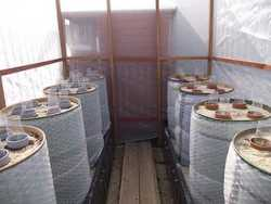 Long Carrot Growing Barrels