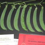 Growing Peas for Show - Exhibition Peas