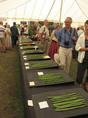 Horticultural Show Runner Beans