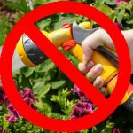 Gardening & Growing Vegetables Under a Hosepipe Ban