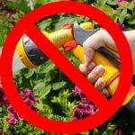Gardening & Growing Vegetables Under a Hosepipe Ban