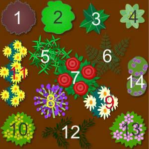Medicinal Herb Garden Plan