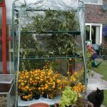 Portable Greenhouses - Patio Greenhouses and Allotment Greenhouses