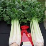 Growing Trench Celery for Show - Cultivating to Staging