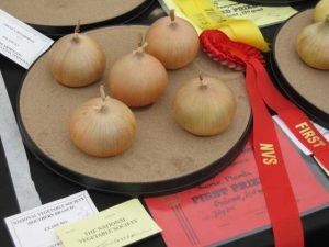 Prize Winning 250gr Onions
