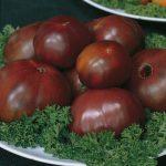 Black Russian Tomato