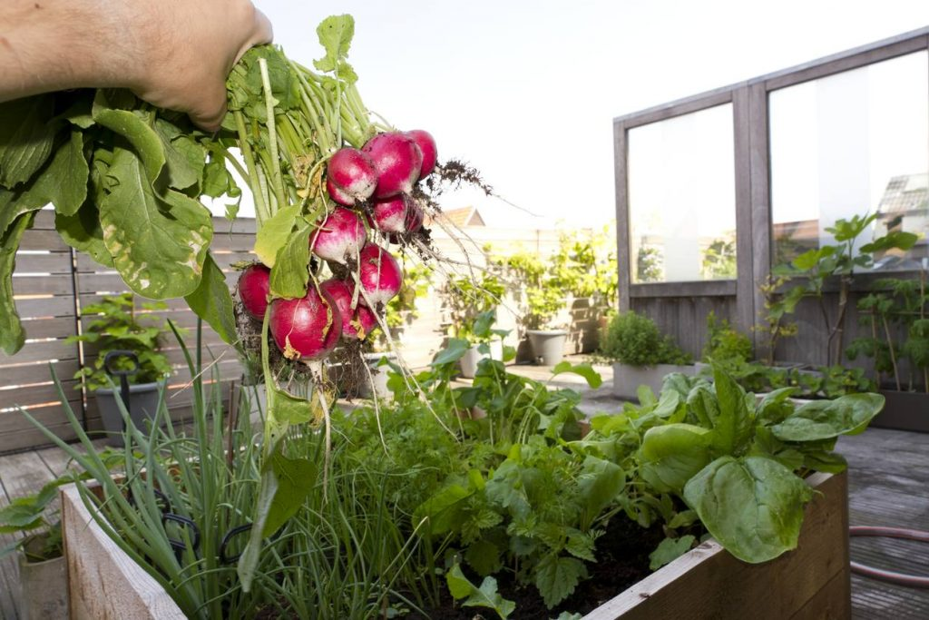 Container Vegetable Growing