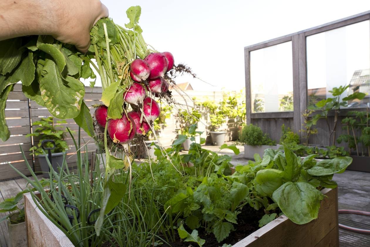 What vegetables can you grow in containers - Best vegetables for container gardening ...
