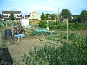Crops Allotment Plot