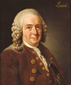 Linnaeus - Plant Families