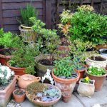 Growing in Pots, Containers, on Patios, Small Spaces Books