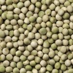 Seed Saving: Peas | Save Your Own Pea Seed