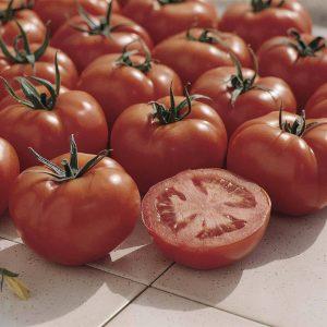Tomato Ferline Blight Resistant