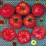 Tomato Soldacki