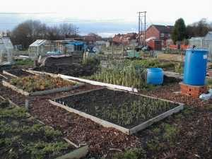 Allotment Plot in December