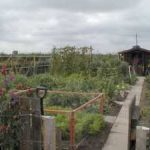 Fruit & Vegetable Growing Guide for July