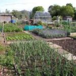Allotment Growing Books