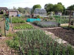 Allotment in May