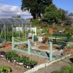 Fruit & Vegetable Growing Guide for October
