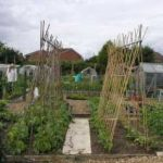 Fruit & Vegetable Growing Guide for June