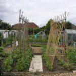 Fruit & Vegetable Growing Guide for June