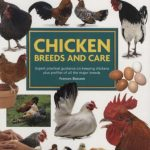 Chicken Breeds and Care - Mini Encyclopedia by Frances Bassom