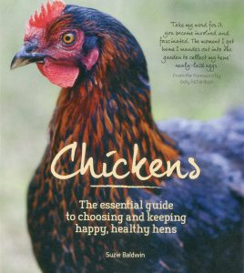 Chickens: The Essential Guide