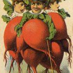 Seed Saving Heirloom or Heritage Seeds