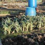 Fruit & Vegetable Growing Guide for January