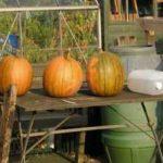 Fruit & Vegetable Growing Guide for September