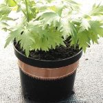 Container Gardening - Protecting Your Plants & Crops From Pests