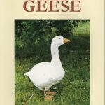 Starting with Geese by Katie Thear