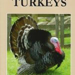 Starting with Turkeys by Katie Thear