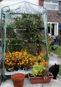 Tomato Grow House
