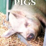 Starting with Pigs by Andy Case