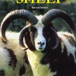 Starting with Sheep by Mary Castell