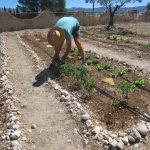 30 Ways to Save Water in Mediterranean Gardens