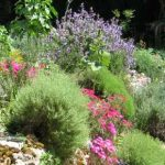 Planning A Hot Climate Garden