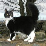 Cats Toileting: How to Stop Cats using Garden or Veg Plot as a Toilet