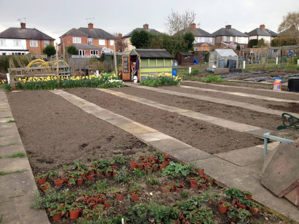 Cleared Allotment Plot
