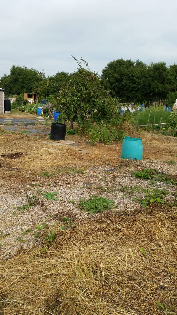 Allotment Before